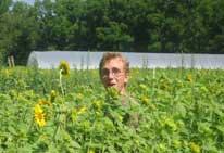 intern_sunflowers